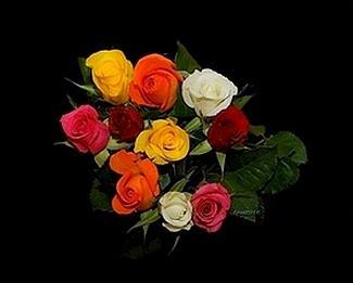 bouquetsderosesmodif.jpg